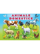 Animale domestice/carton